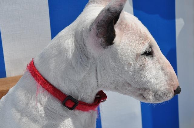 Albín psy: zaujímavé fakty, ktoré by ste mali vedieť
