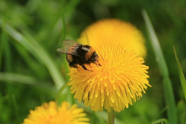 Aj vo vašej záhrade môžu včely prežiť, ak im vytvoríte vhodné podmienky.